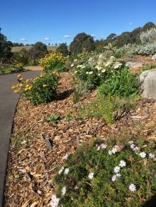 The daisy garden