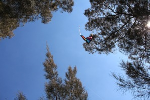 The kite then got stuck in the tree