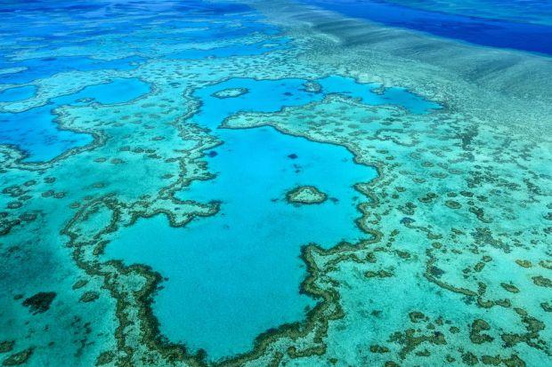 great-barrier-reef-aerial-4.jpg.990x0_q80_crop-smart.jpg