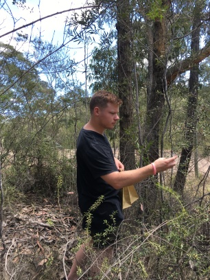 Mitch helping me collect Grevillea mucronulata seeds in Wollemi NP