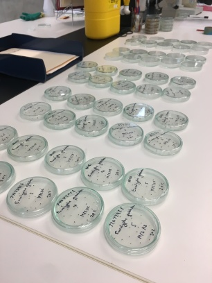 Lots of agar dishes with lots of seeds germinating