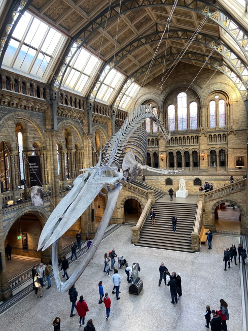 The incredible Natural History Museum in London